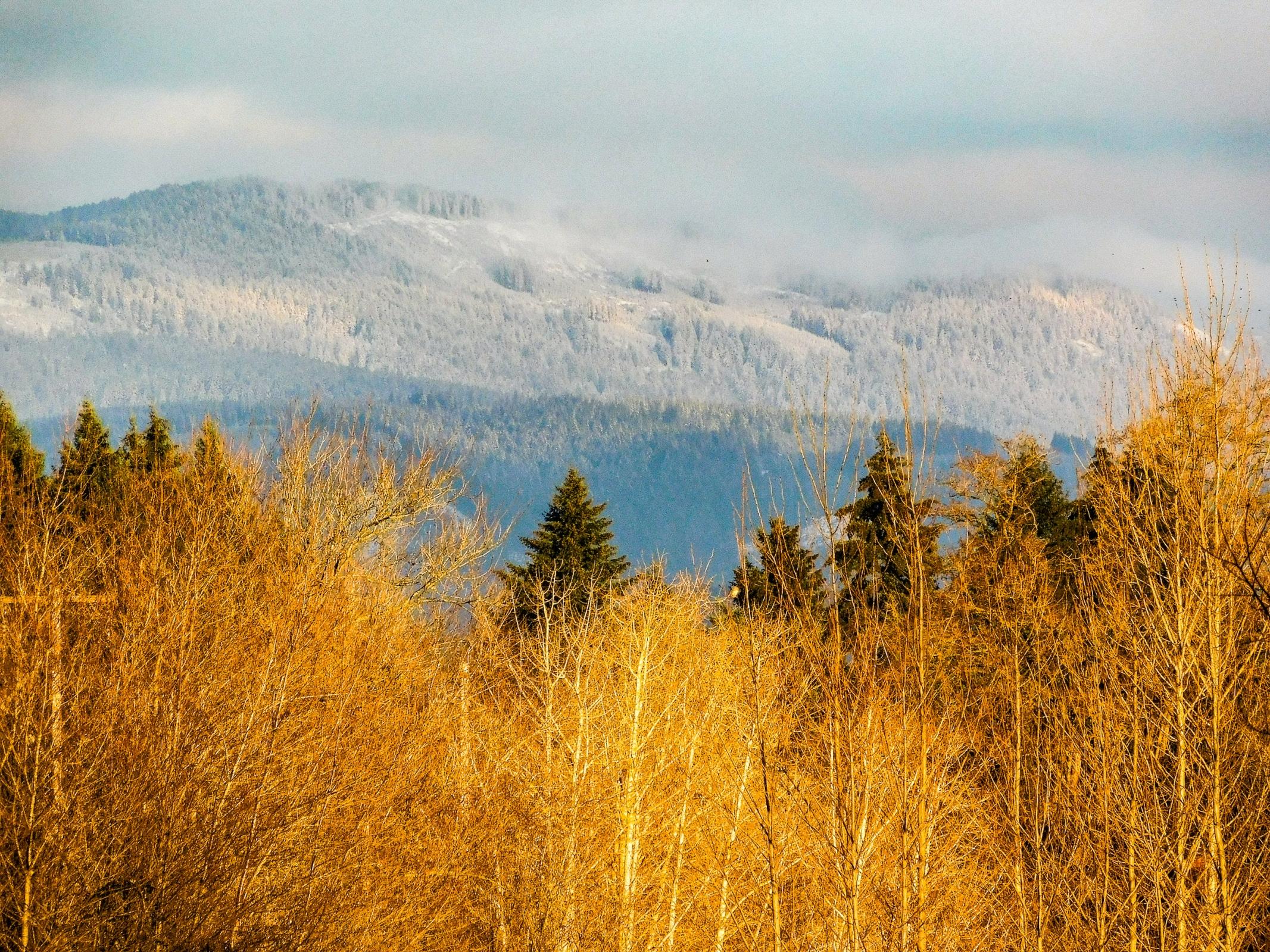 Silver Star Mountain / Vancouver, Washington